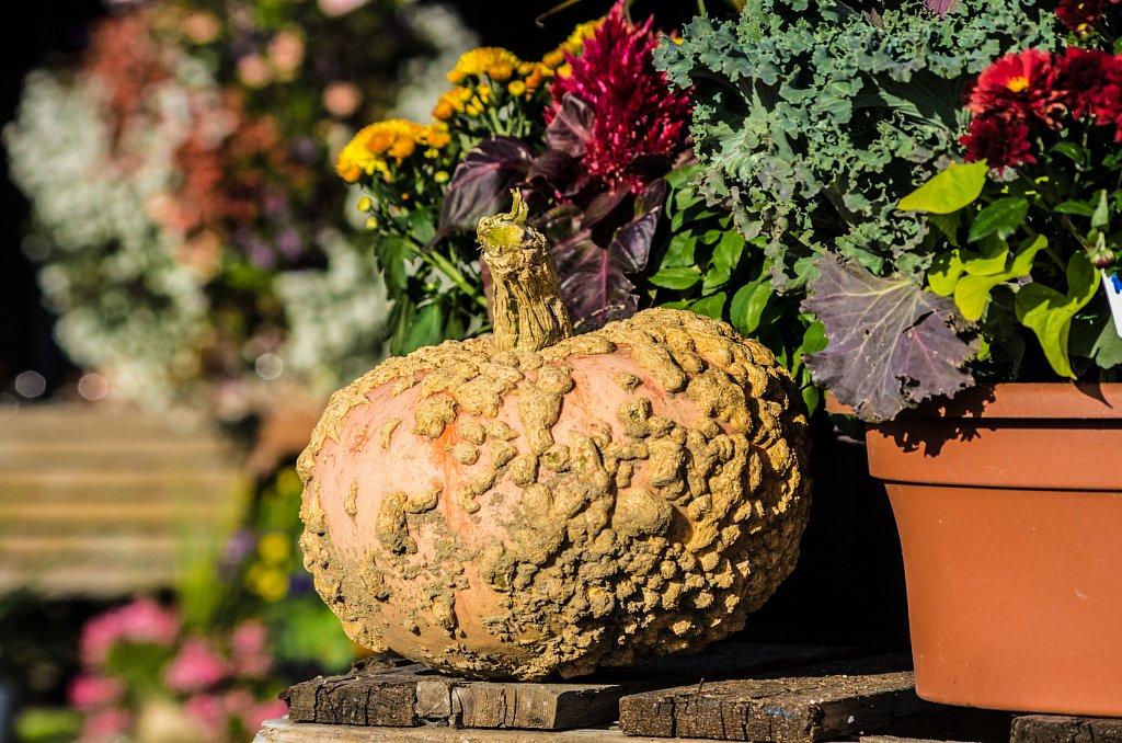 Kürbis - Pumpkin #1
